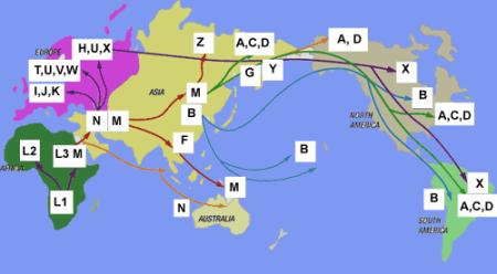 ADN mitocondrial, migraciones