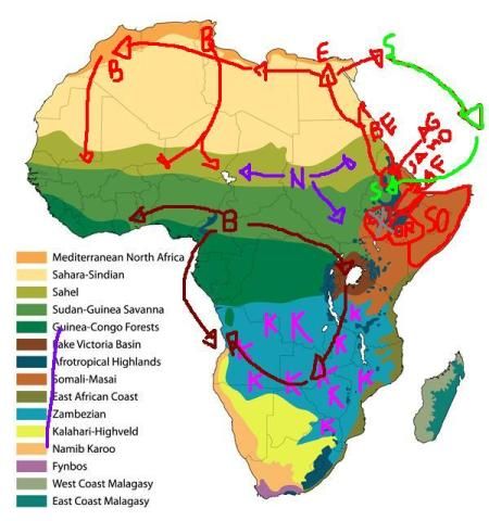 Africa Biomes and languages