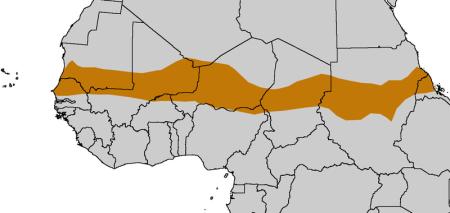 El corredor del Sahel