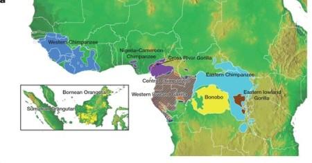 Los chimpancés de la selva ecuatorial y tropical