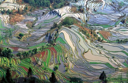 Terrace_field_yunnan_china_denoised (1)