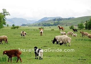 xinjiang-bayanbulak-grassland