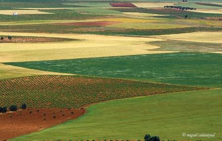 nuestros-campos-manchegos