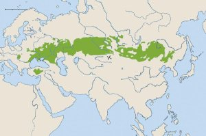 steppe_2009