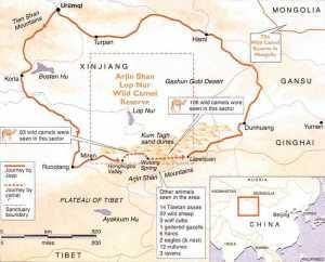 Xinjiang-Wild-Camel-Reserve