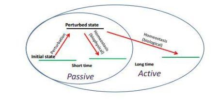 active-biophysics