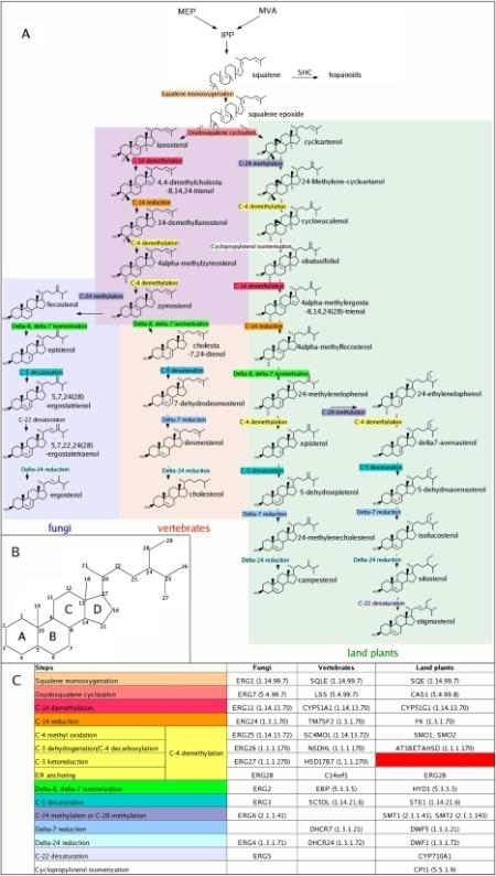 esterols-evolution