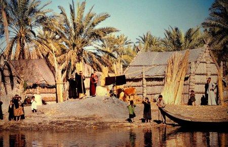 marsh-arabs